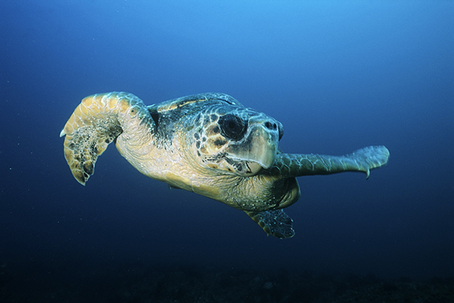 sea turtle cheap stock image